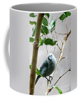 Blue-grey Tanager Coffee Mug