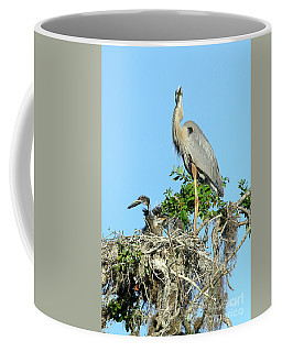 Coffee Mug featuring the photograph Blue Heron Series Baby 2 by Deborah Benoit
