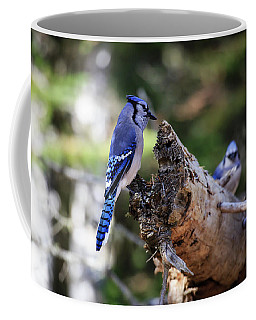 Coffee Mug featuring the photograph Blue Jay 2 by Gary Hall
