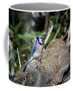 Coffee Mug featuring the photograph Blue Jay 3 by Gary Hall