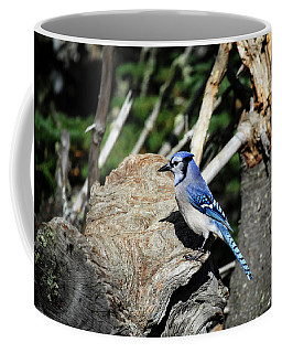 Coffee Mug featuring the photograph Blue Jay 4 by Gary Hall
