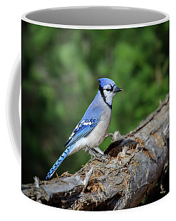 Coffee Mug featuring the photograph Blue Jay 5 by Gary Hall