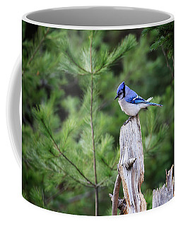 Blue Jay 6 Coffee Mug by Gary Hall