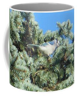Coffee Mug featuring the photograph Blue Jay Colorado Spruce by Rockin Docks Deluxephotos