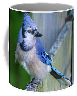 Blue Jay Fluffed Coffee Mug
