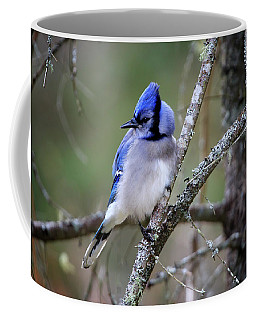 Coffee Mug featuring the photograph Blue Jay by Gary Hall