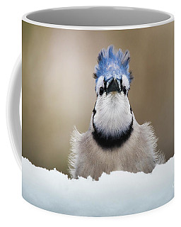 Blue Jay In Snow Coffee Mug