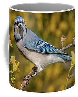 Blue Jay In Yellow Spring Coffee Mug