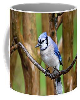 Blue Jay On A Branch Coffee Mug