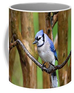 Blue Jay On A Branch Coffee Mug by Trina Ansel