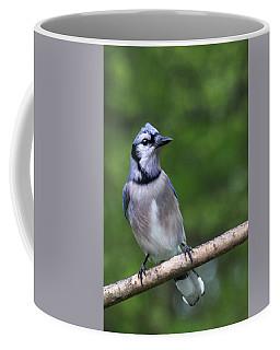 Blue Jay On Alert Coffee Mug