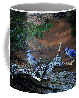 Coffee Mug featuring the photograph Blue Jay Pair by Gary Hall