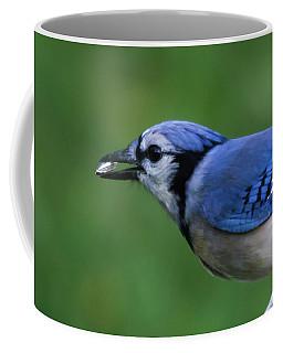Blue Jay With Seed Coffee Mug