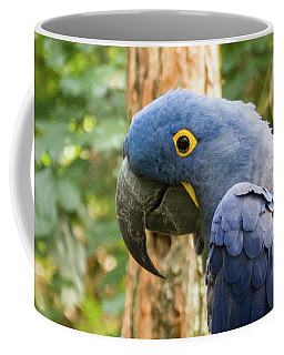 Blue Macaw Coffee Mug