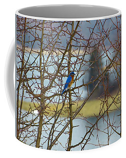 Coffee Mug featuring the photograph Blue On The Limb by Donald C Morgan