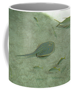 Coffee Mug featuring the photograph Blue Spotted Ray And Friends by Carol Lynn Coronios