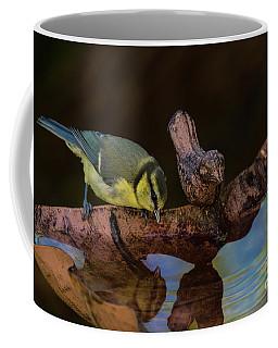 Blue Tit Drinking Coffee Mug