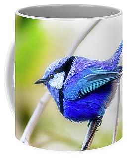 Blue Wren, Margaret River Coffee Mug by Dave Catley