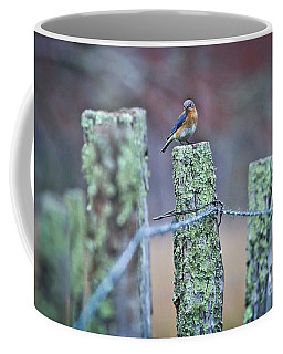 Coffee Mug featuring the photograph Bluebird 040517 by Douglas Stucky