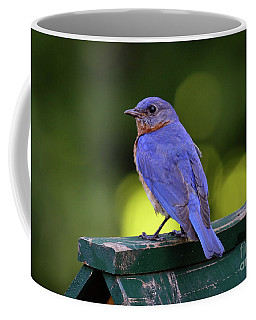 Coffee Mug featuring the photograph Bluebird 0618162 by Douglas Stucky