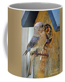 Coffee Mug featuring the photograph Bluebird 072616 by Douglas Stucky