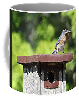 Bluebird Breakfast Feeding Coffee Mug