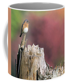 Bluebird Fall Perch Coffee Mug