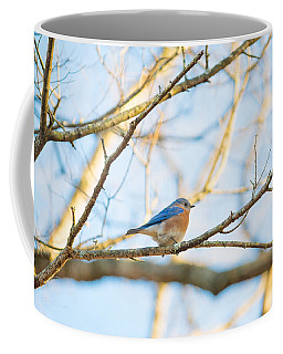Bluebird In Tree Coffee Mug