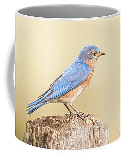 Bluebird On Fence Post Coffee Mug