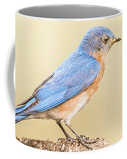 Coffee Mug featuring the photograph Bluebird On Fence Post by Robert Frederick