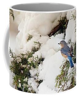 Bluebird On Snow-laden Cedar Coffee Mug