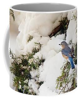 Coffee Mug featuring the photograph Bluebird On Snow-laden Cedar by Robert Frederick