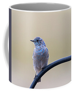Coffee Mug featuring the photograph Bluebird Portrait by John Brink