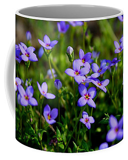 Coffee Mug featuring the photograph Bluets by Kathryn Meyer