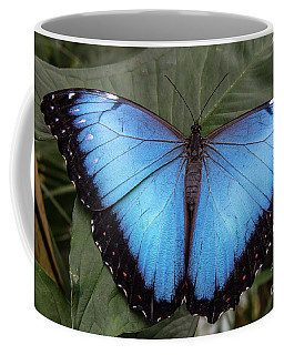 Blue Morph Coffee Mug