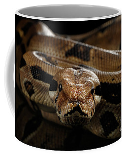 Coffee Mug featuring the photograph Boa Constrictor Imperator Color, On Isolated Black Background by Sergey Taran