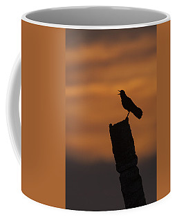 Boat-tailed Grackle At Sunset Coffee Mug