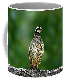Coffee Mug featuring the photograph Bob White by Ronnie and Frances Howard