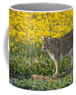 Bobcat In The Swamp Coffee Mug by Myrna Bradshaw