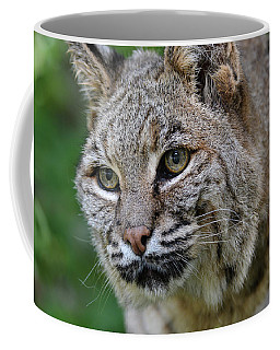 Bobcat In The Trees Coffee Mug