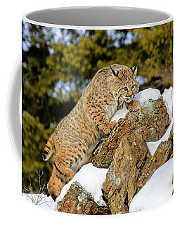 Bobcat  Coffee Mug