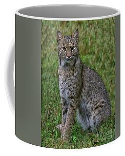 Bobcat On Alert Coffee Mug
