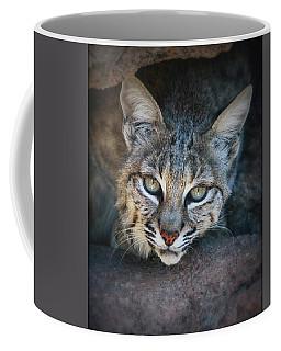 Bobcat Stare Coffee Mug