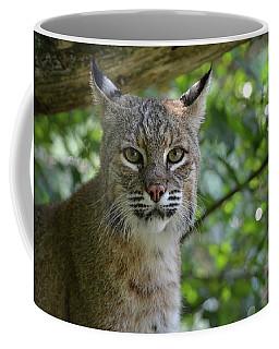 Bobcat Staring Contest Coffee Mug