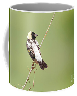 Bobolink Looking At You Coffee Mug