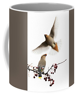 Coffee Mug featuring the photograph Bohemian Waxwings by Mircea Costina Photography