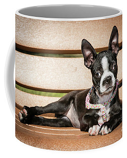 Boston Terrier Puppy Relaxing Coffee Mug by Stephanie Hayes