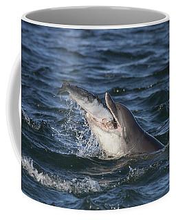 Bottlenose Dolphin Eating A Salmon - Scotland #5 Coffee Mug