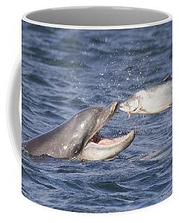 Bottlenose Dolphin Eating Salmon - Scotland  #36 Coffee Mug