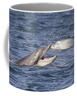 Bottlenose Dolphin Eating Salmon - Scotland  #36 Coffee Mug